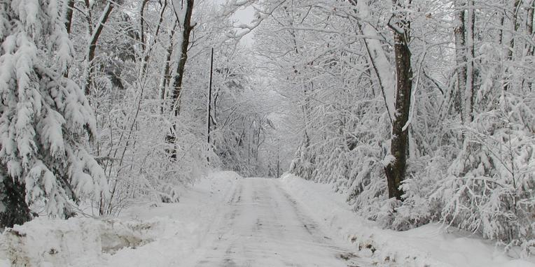 snow covered road in the woods