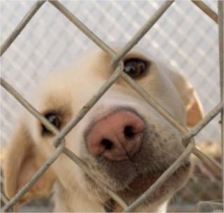 Dog through fence