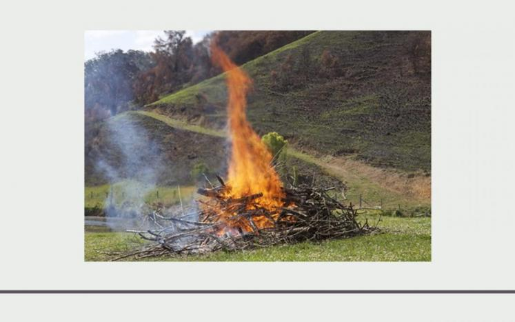 orange flames coming from a pile of brush